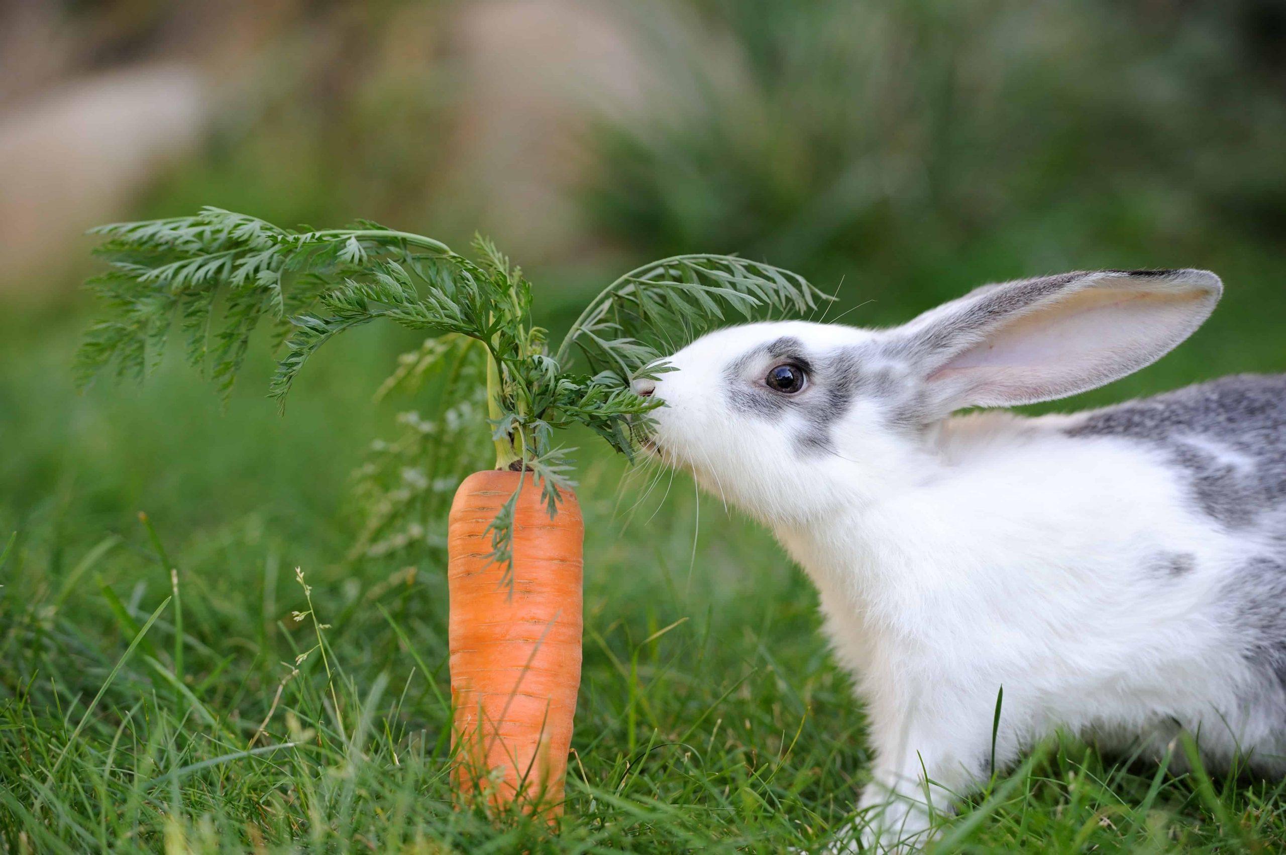 Konijnenvoer: Wat is het beste konijnenvoer van 2020?