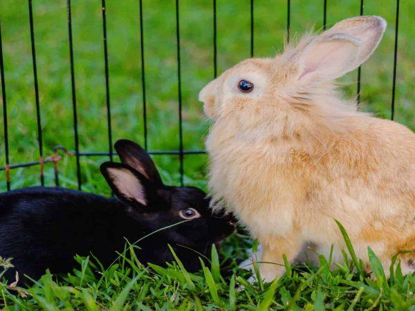 Konijnenhok: Wat zijn de beste konijnenhokken van 2020?