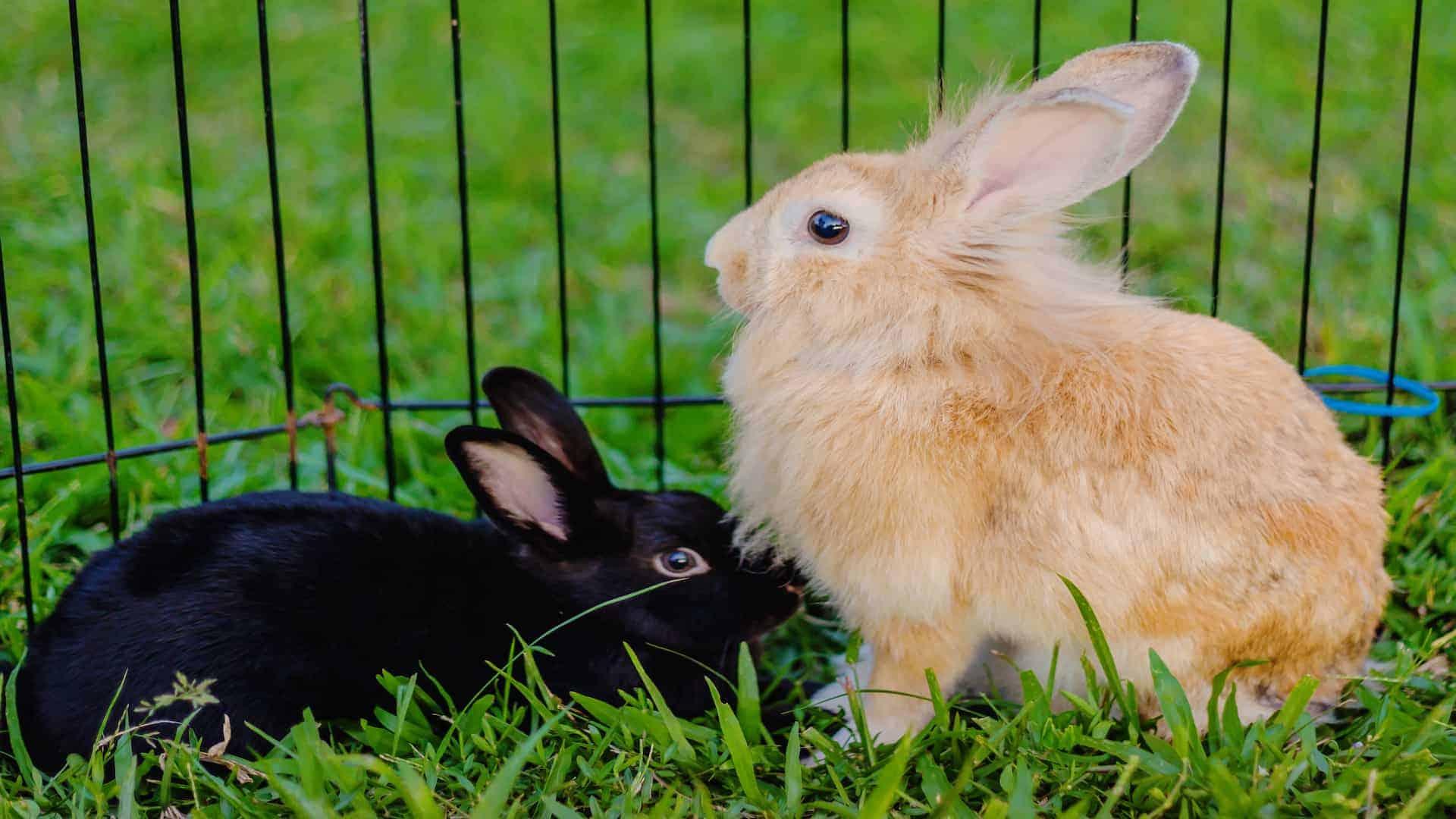 Konijnenhok: Wat zijn de beste konijnenhokken van 2021?