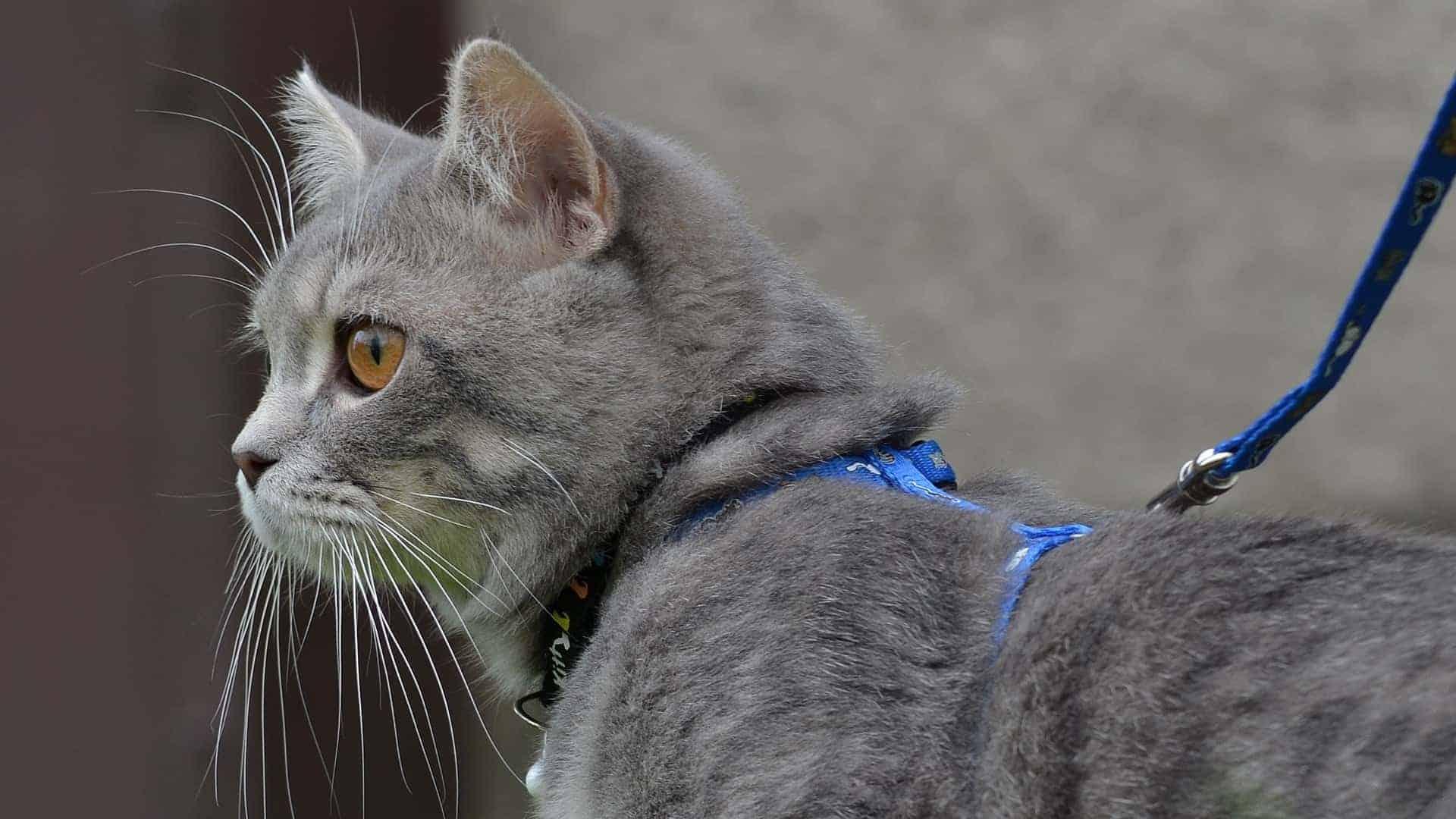 Kattentuigje: Wat zijn de beste kattentuigjes van 2020?
