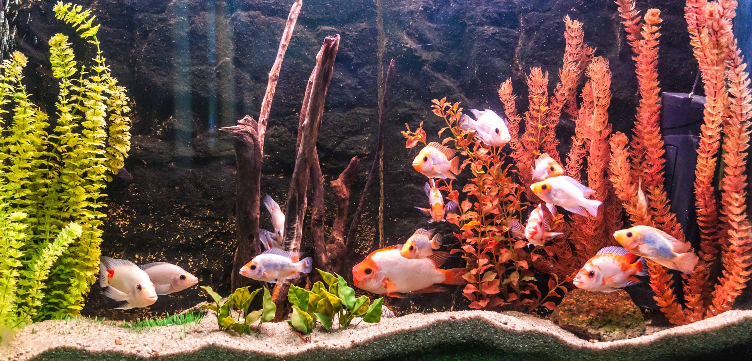 Aquarium: Wat zijn de beste aquaria van 2021?