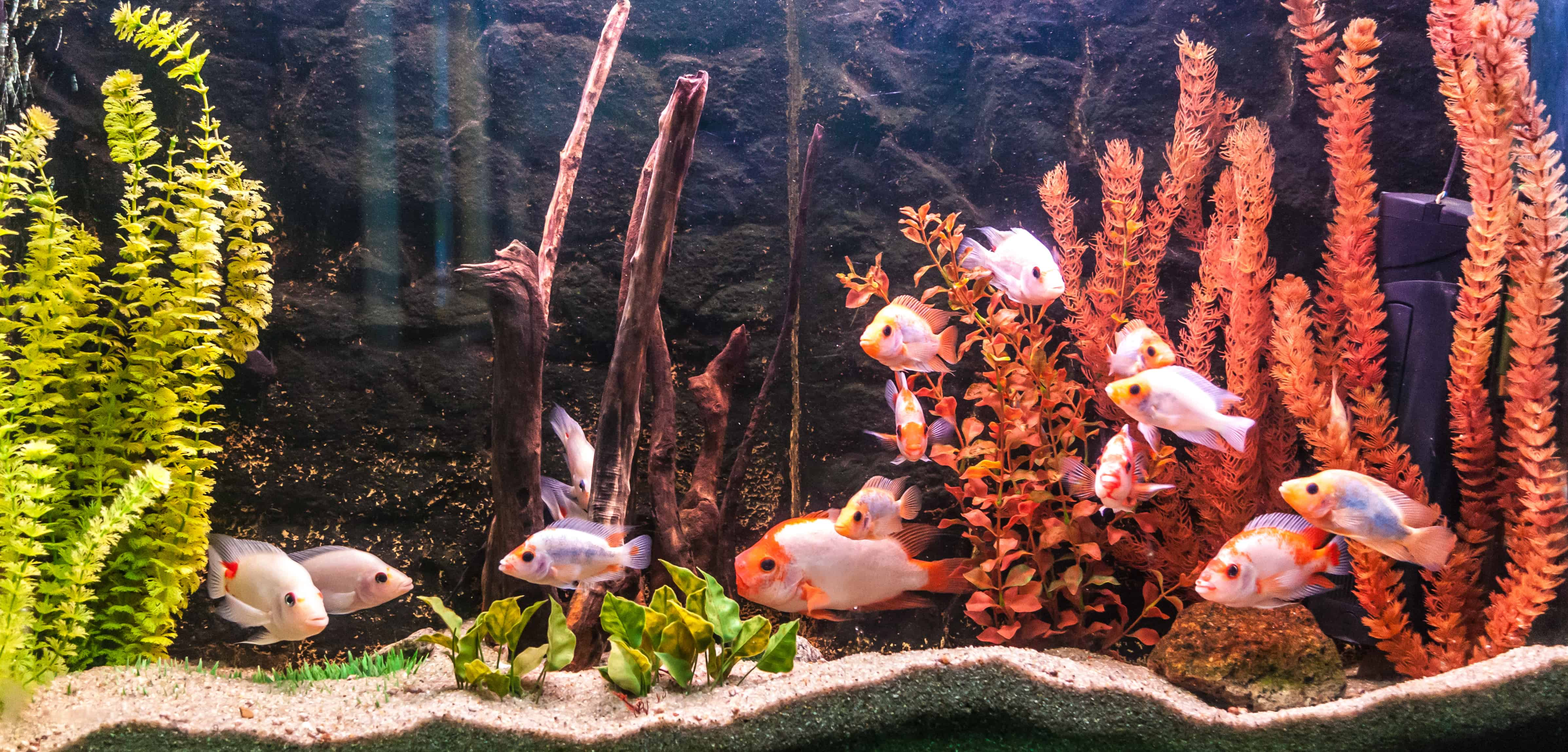 Aquarium: Wat zijn de beste aquaria van 2020?