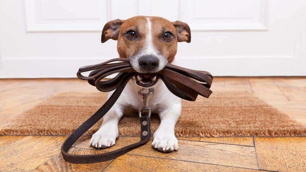 Hondenriem: Wat is de beste hondenriem van 2020?