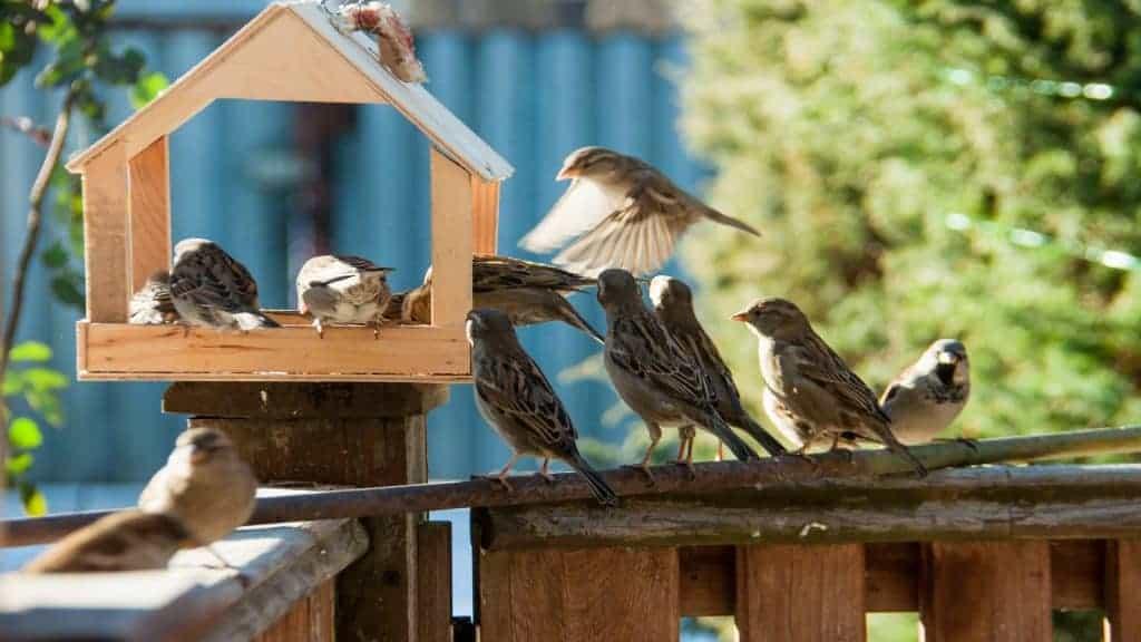 Vogelvoederhuisje: Wat zijn de beste vogelvoederhuisjes van 2021?