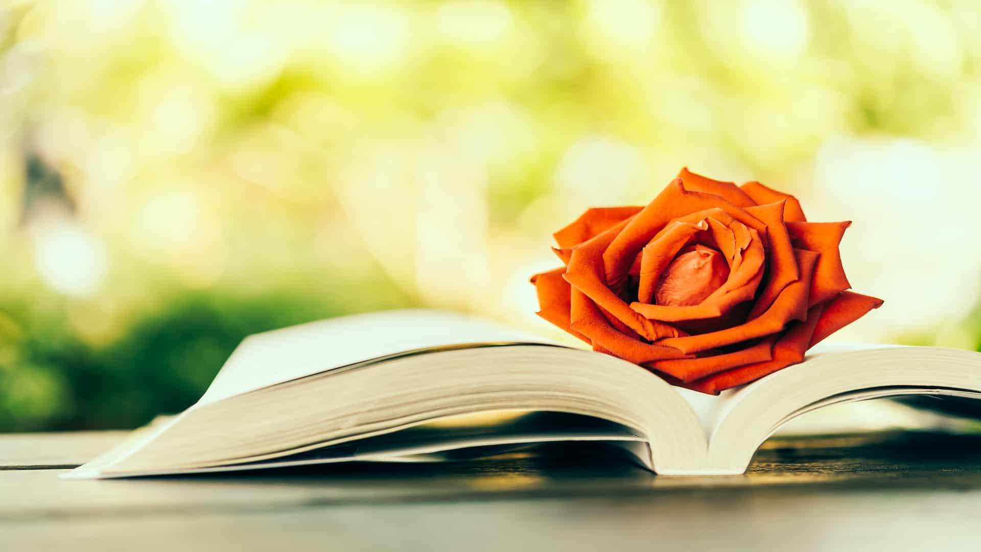 Romantisch boek: Wat zijn de beste romantische boeken van 2021?