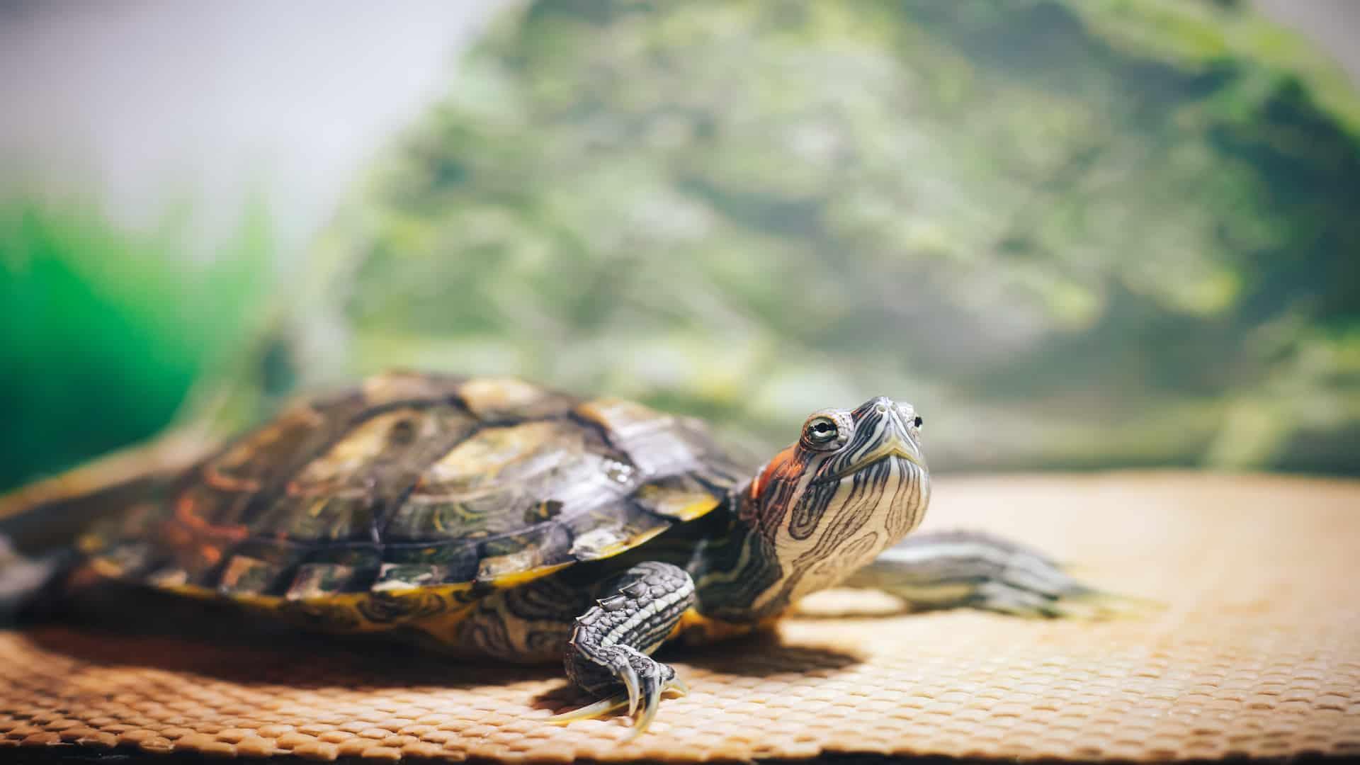 Schildpadbak: Wat zijn de beste schilpadbakken van 2020?