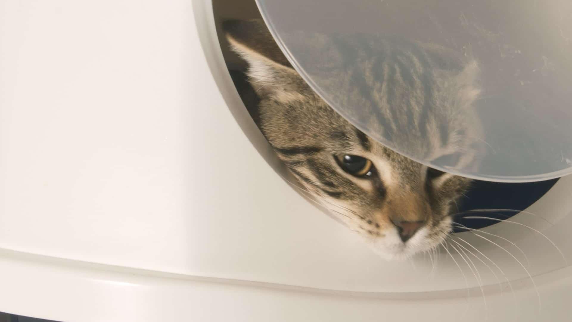 Zelfreinigende kattenbak: Wat zijn de beste zelfreinigende kattenbakken van 2021?