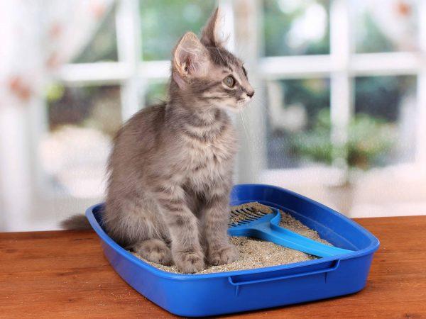 Kattenbakvulling: Wat zijn de beste kattenbakvullingen van 2020?