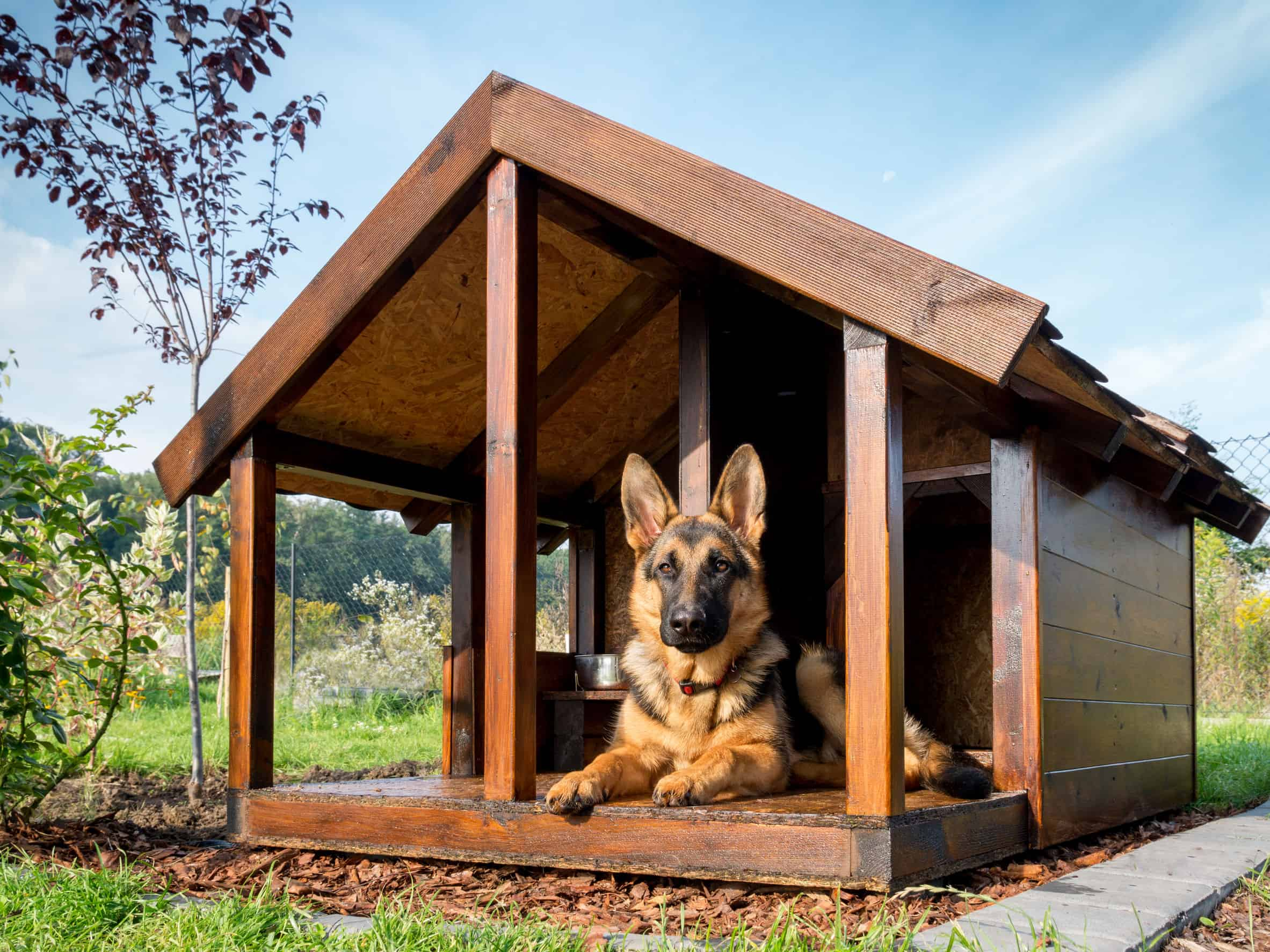 German shepherd resting in its wooden kennel