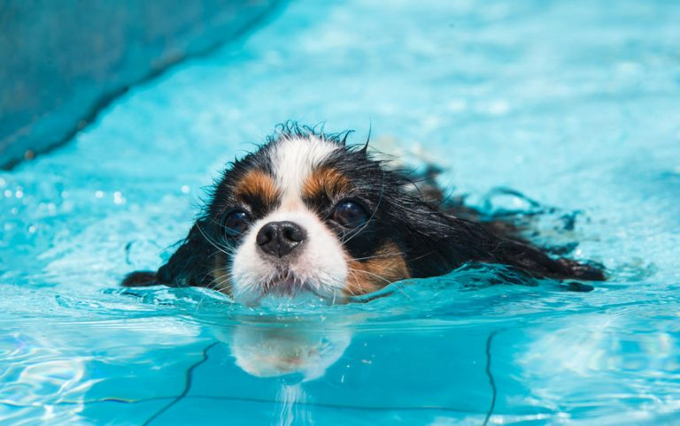 little puppy swimming in a pool
