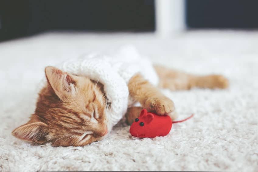 Kattenspeeltje