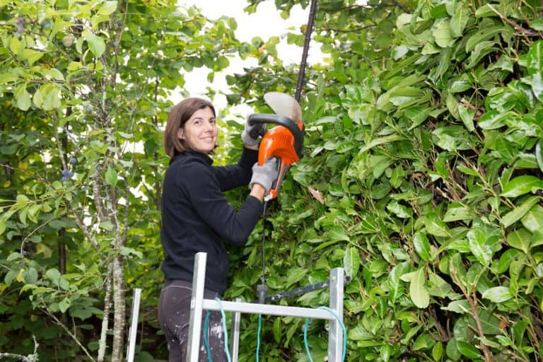 Woman trimming bushes in her backyard using an electrical hedge trimmer