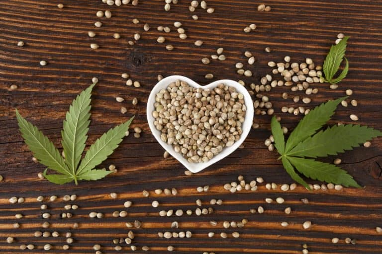hemp seeds and plant
