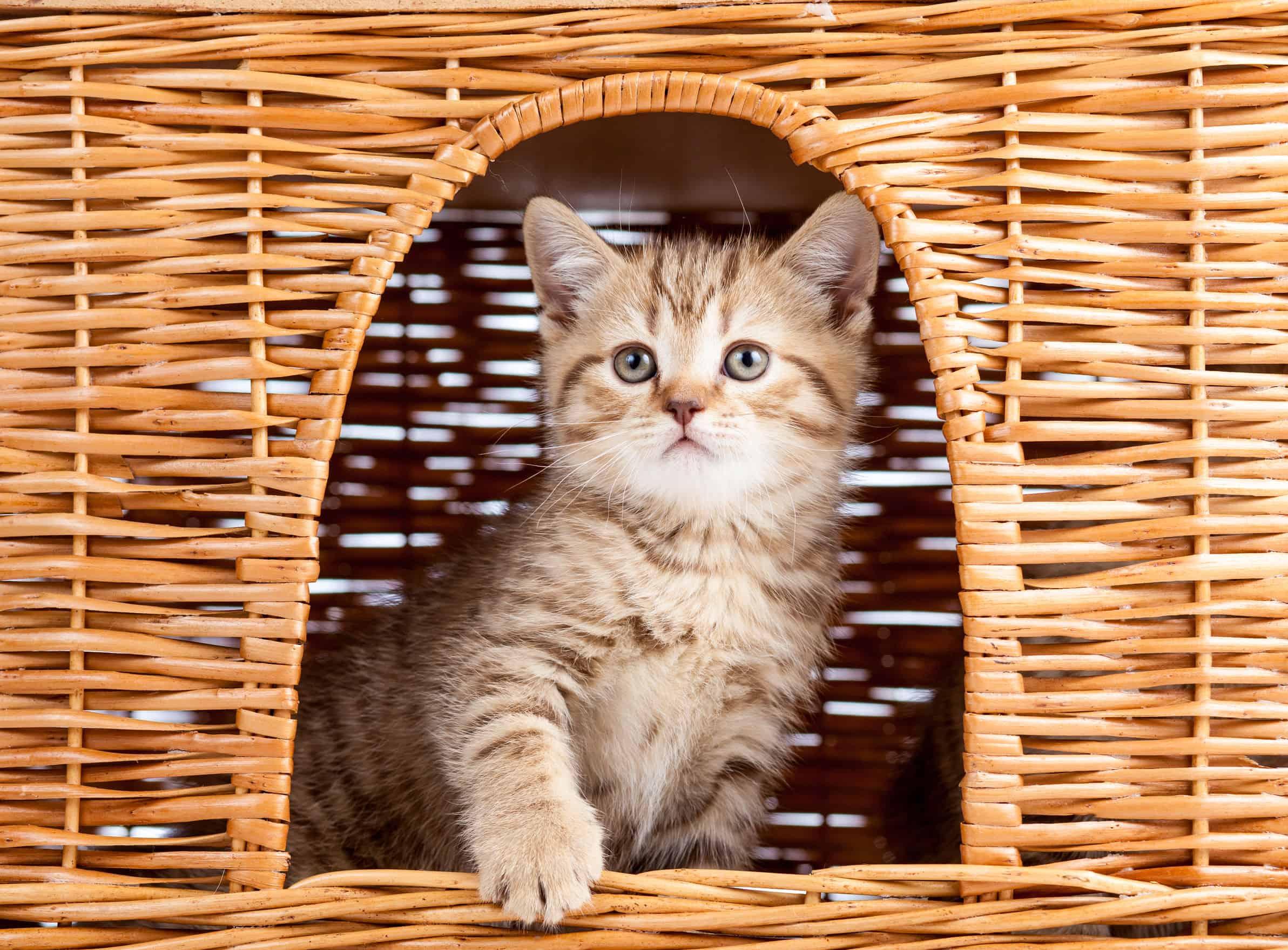 Kattenhuis: Wat zijn de beste kattenhuizen van 2020 ?