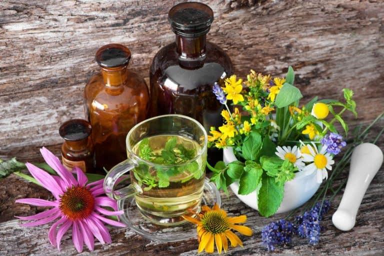 echinacea oil