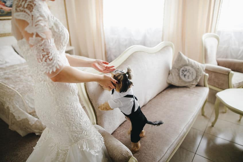 puppy op bruiloft