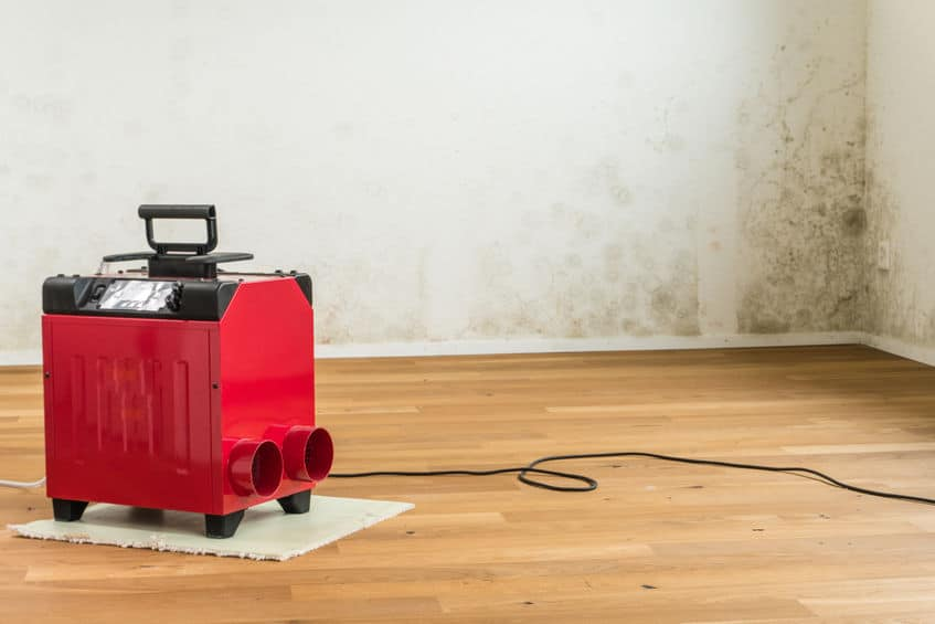 rode luchtontvochtiger in een lege kamer van een nieuw appartement met een ernstig probleem met giftige schimmels en meeldauw