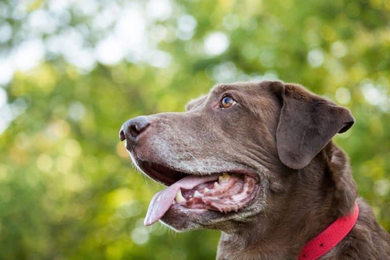 hond met halsband