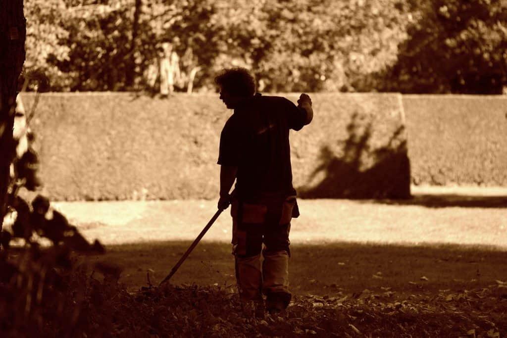 Imagem de um homem usando um ancinho para coletar folhas secas.