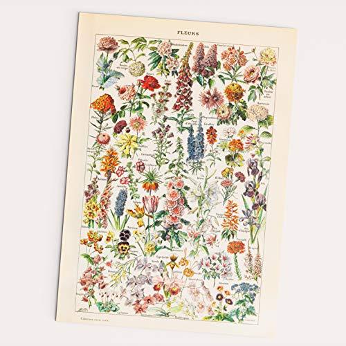 Follygraph Vintage Poster - Fleurs - 1909 Adolphe Millot herdruk (A2)